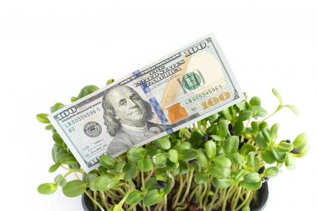 Growing dollars, one hundred dollar bill on white