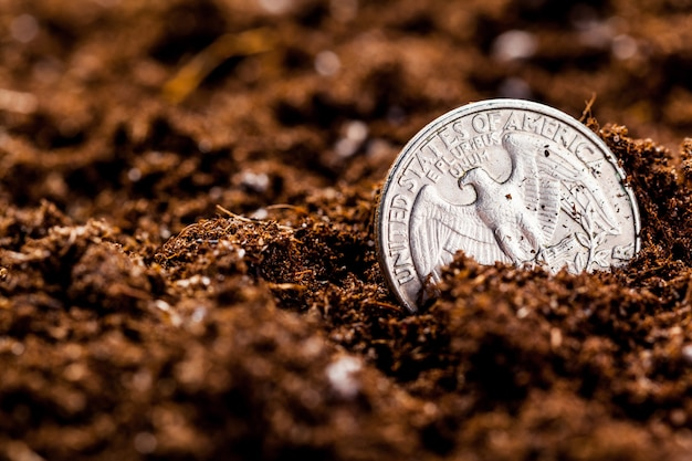 Growing euro coins, small depth of field,