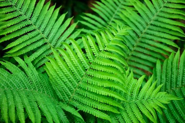 Growing fern leaves