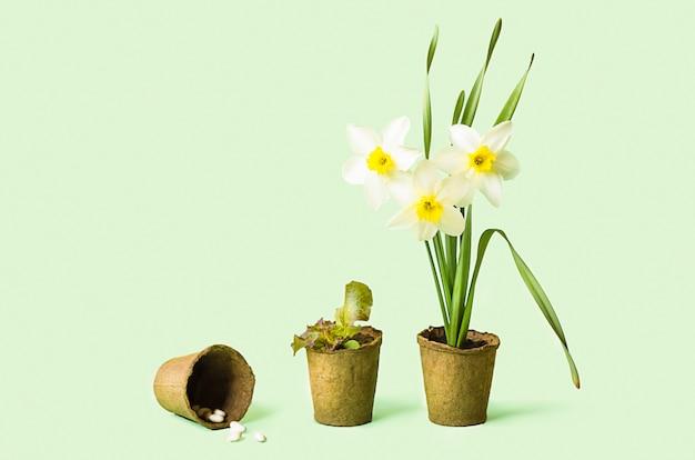 泥炭ポットで成長する花、野菜、ハーブ、緑、種子。春のガーデニング。品種の植物。