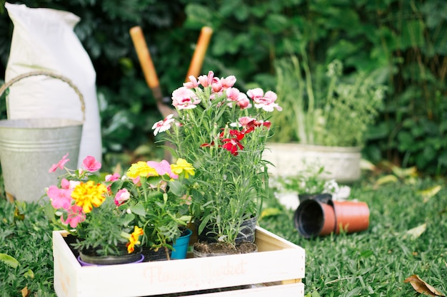 Growing flowers in wooden boxes on garden yard