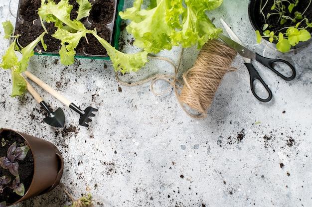 Выращивание садоводства хобби. специальные пластиковые и торфяные горшки для выращивания трав, пульверизатор и садовый инвентарь. copyspace вид сверху