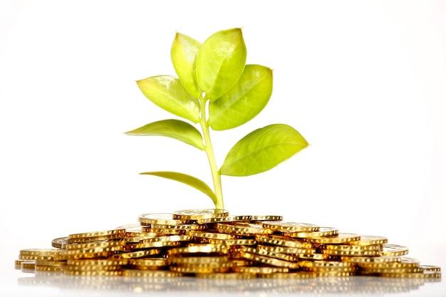 金貨から緑の新鮮な葉を育てる