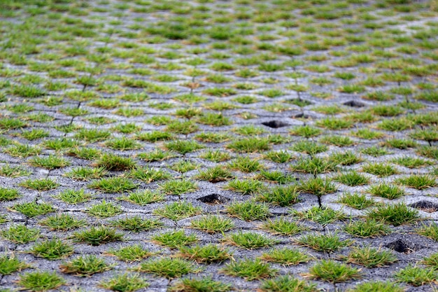 시멘트 야외 바닥에 녹색 잔디 성장