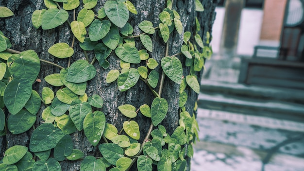 緑のツタの木の成長