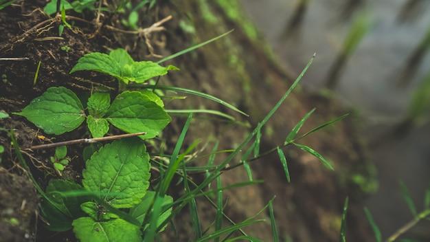 성장하는 녹색 담쟁이 나무