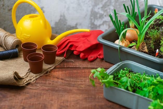 집에서 손으로 채소를 키웁니다. 집에서 재배한 친환경 제품입니다. 홈 케어 가든. 텍스트 스페이스