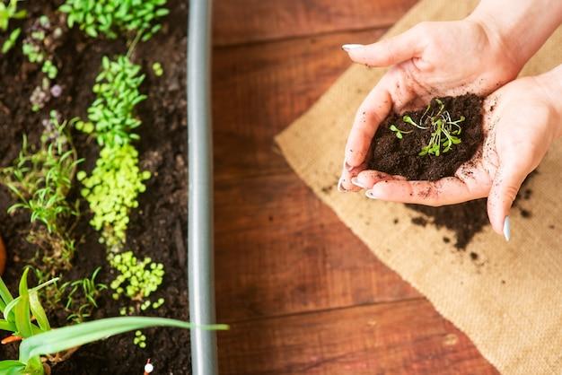집에서 자신의 손으로 채소를 재배하십시오. 집에서 재배한 친환경 제품입니다. 홈케어 미니정원