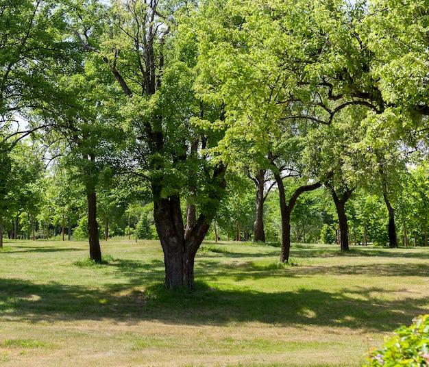 晴れた日の夏に撮影された並木に生えている