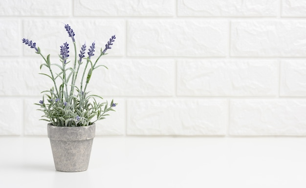 Growing lavender in a gray ceramic pot on a white table. white brick wall background, copy space