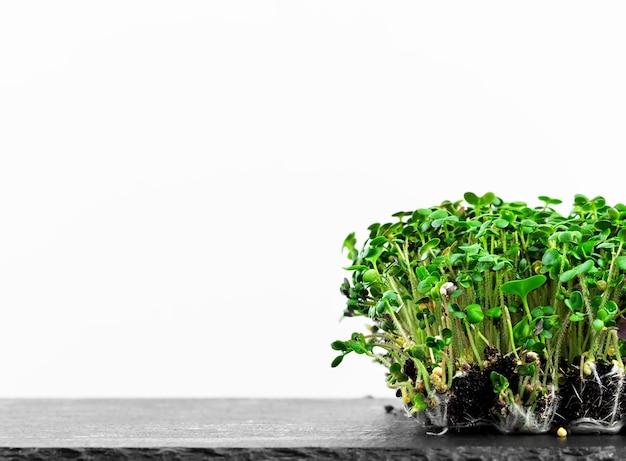 Выращивание микрозелени в домашних условиях на белой поверхности