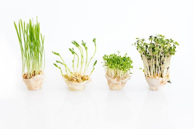 Выращивание микрозелени на белом фоне со свободным пространством для текста, концепция здорового питания из свежих садовых продуктов, органически выращенных как символ здоровья.