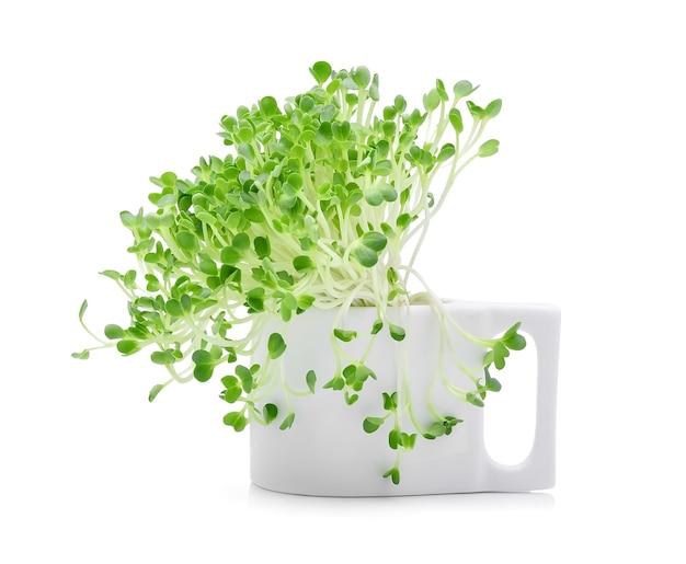白地に成長するマイクログリーン