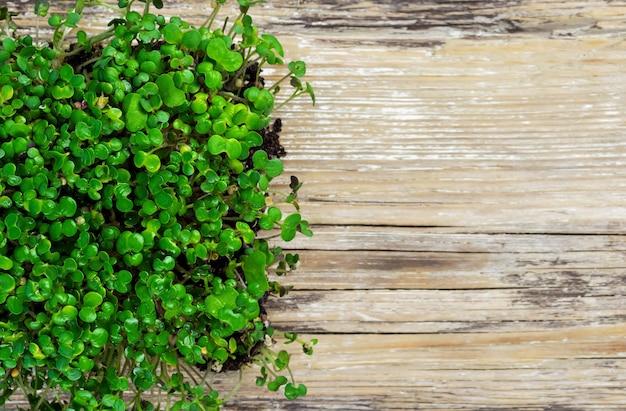 Выращивание микрозелени на деревянной поверхности