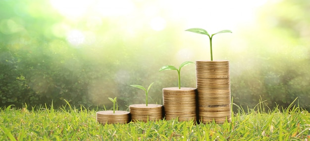 Growing plant on coins. finance  investment concep