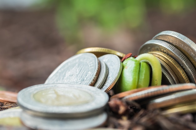 Growing plant on coins money - investment concept