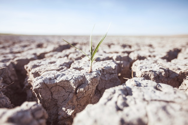 Growing plant on drought land