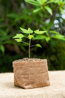 袋鍋で植物を育てる