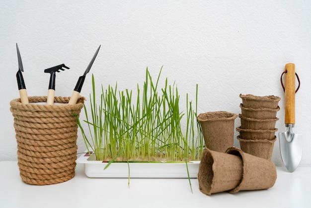 Growing plants equipment