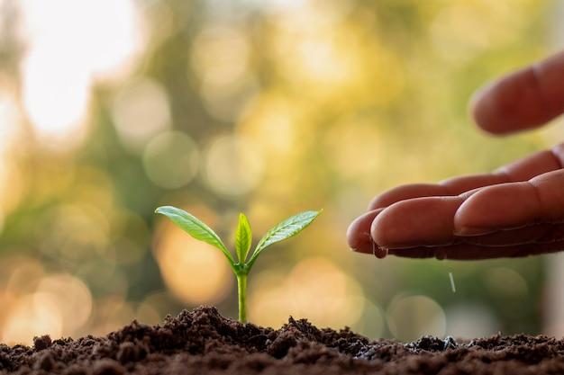肥沃な土壌で植物を育て、水をまく
