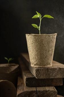 鍋で野菜の苗を育てる土の芽1本若い緑の新芽