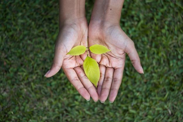 人間の手で成長している木