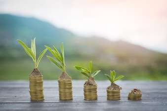 Growing tree in soil and coins with nature background. Business and finance concept