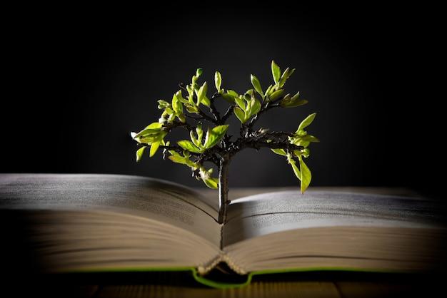 開いた本から緑の葉で木を成長させる