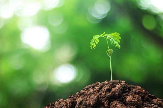 自然の背景の中で地面で育った種から木を育てる