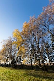 Растущие деревья рядом с деревьями, покрытыми осенней желтой листвой