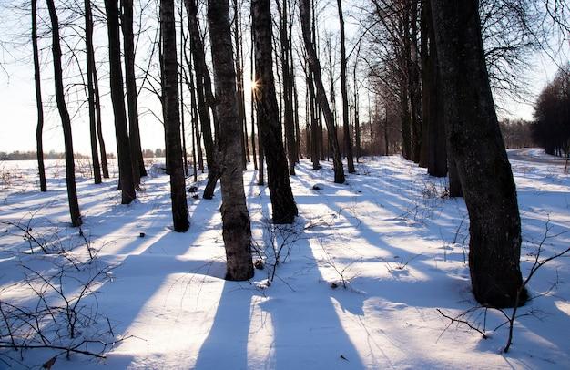Growing trees in a winter season