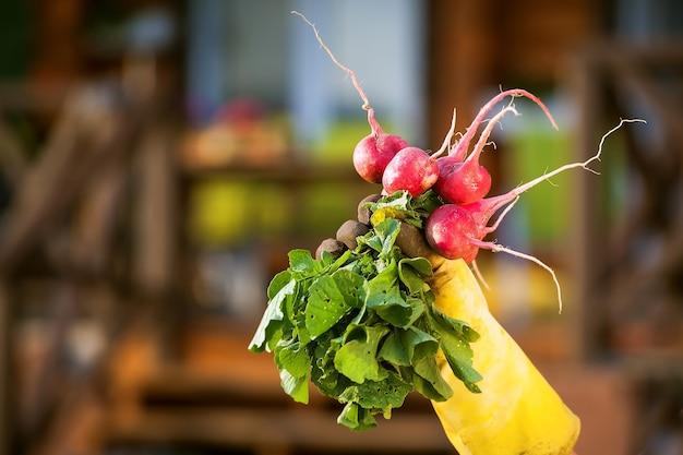 Выращивание овощей в загородном доме