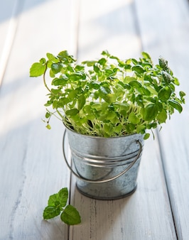Grown micro-green basil in a metal jar on a white wooden background. the concept of conscious nutrition,  vegetarian food Premium Photo
