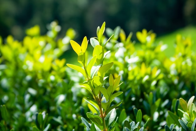 흐린 배경 햇빛에 녹색 부시 대통령의 부드러운 나뭇 가지를 성장. 선택적 초점. 근접 촬영보기