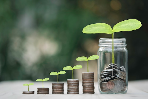 Growth of coins stacking and saving jar with plant, money saving and dividend concept.