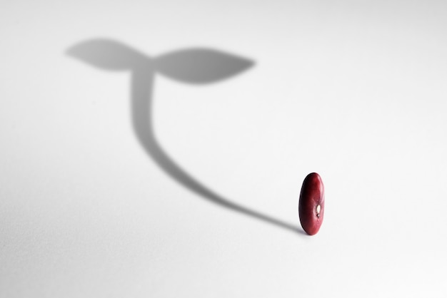 Концепция роста с тенью растениеводства