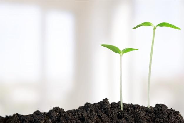 Рост новой жизни на фоне