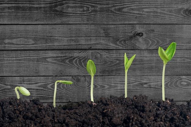 背景に新しい生命の成長
