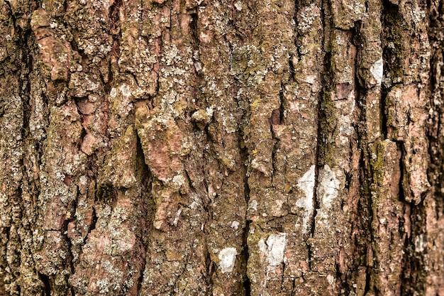 Grunge background of old linden tree bark