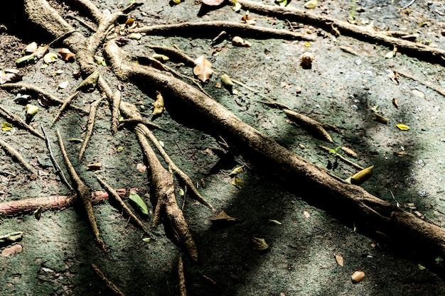 Grunge big tree root