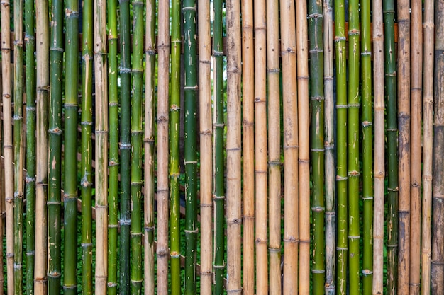 Grunge green bamboo fence,texture background.