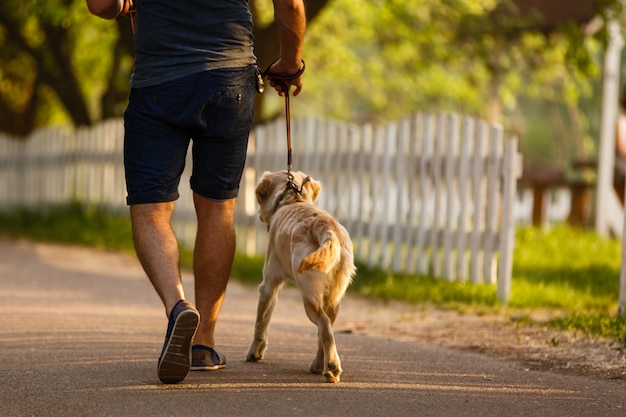 Guide dog helping blind man