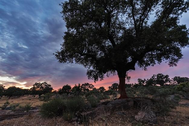 Guijo de galisteo近くの日没の風景。エストレマドゥーラ。スペイン。