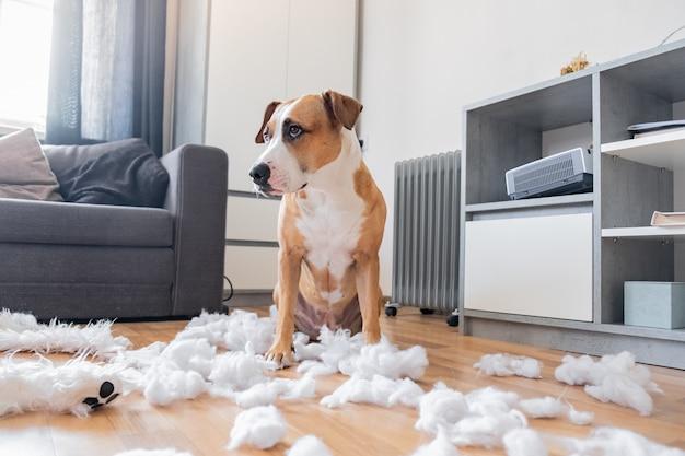 Виновная собака и разрушенный плюшевый мишка дома.
