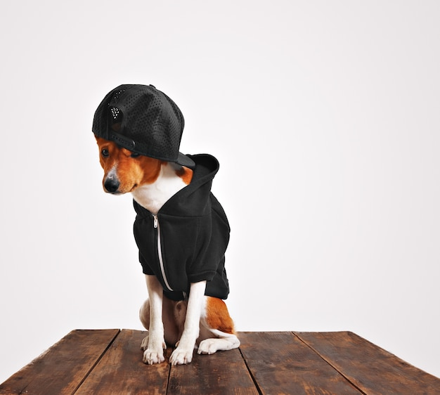 Guilty looking brown and white dog in cool black hoodie and trucker cap with mesh back on a rustic wooden table