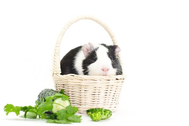 흰색 바탕에 신선한 야채와 기니피그