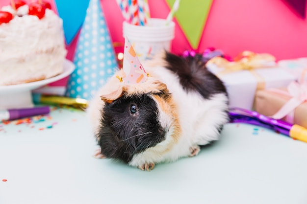 Guinea pig with party hat on its head sitting near the birthday decoration