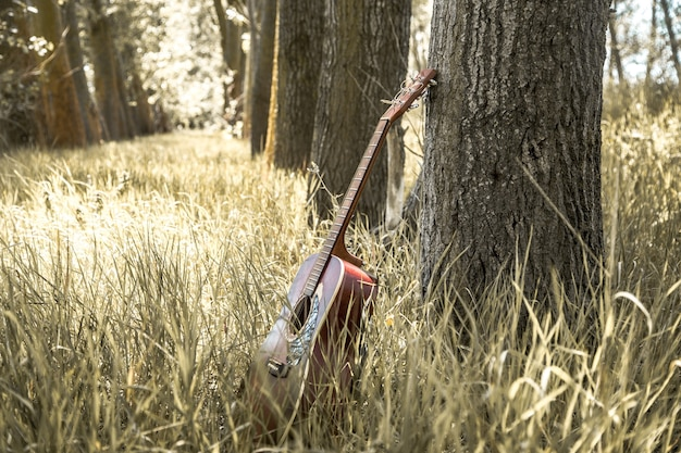 Guitar in nature