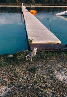 갈매기 새는 목조 다리, 자연 및 동물군 근처 강변에 서 있습니다.