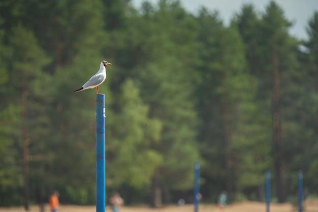 Чайка на шесте на фоне зеленых деревьев